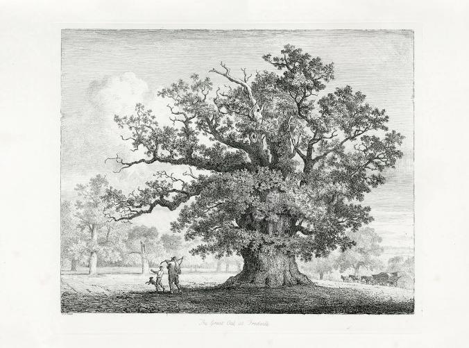 oak etching